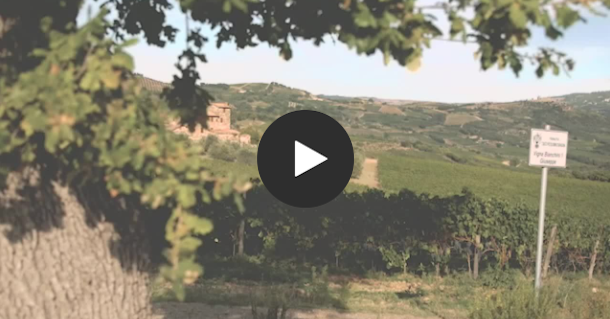 Ciacci Piccolomini d'Aragona winery creates a perfect blend of tradition and technology with Microsoft Teams